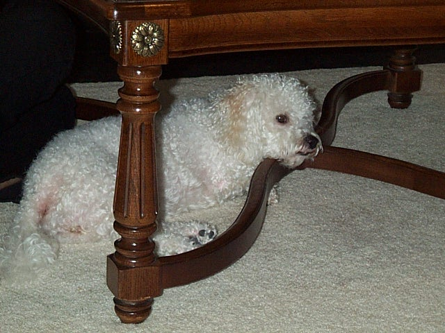 maggie under table 3